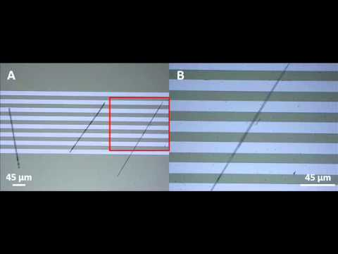 Rapid fabrication of Silicon wires