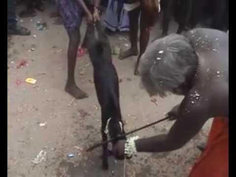 Hijra Festival video