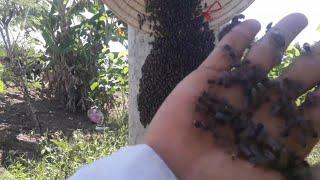 """Cách bắt ong chúa trong cột điện đơn giản và hiệu quả""""săn bắt đồng nai """""""