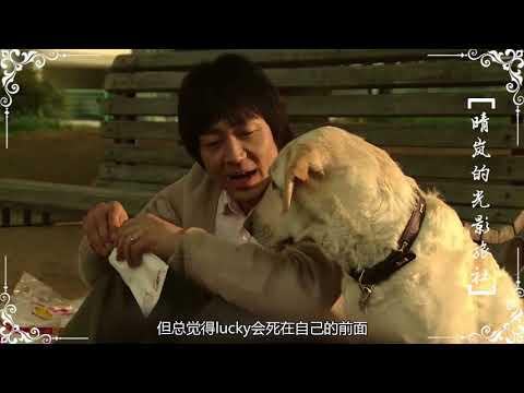 一部關于狗狗的電影,看哭了多少有故事的人,甚至引起了一波關于生命