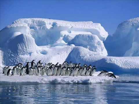 Dansul Pinguinului sa ti-o nping