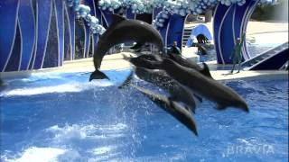 Sony 1080p Demo - Seaworld