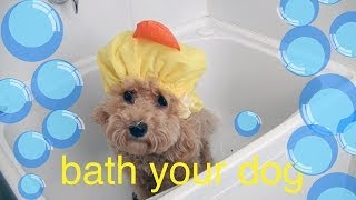 Bath your Toy Poodle - DIY Dog Hygiene/Groom - a tutorial by Cooking For Dogs