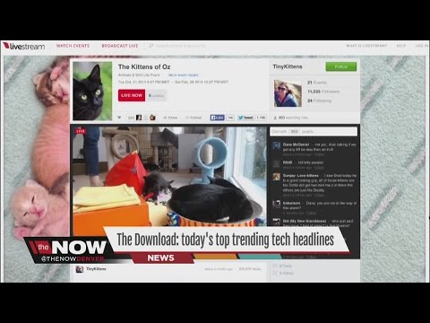 The Download: Facebook's birthday, Igloos on Airbnb and kitten livestreams via Ryan Tronier