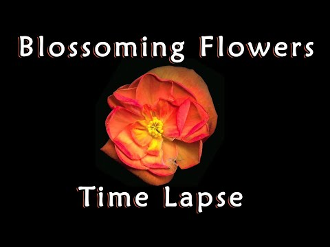 Beautiful Flowers Time Lapse Compilation Amazing Blossoming Nature