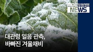 R)대관령 얼음 관측..바빠진 겨울채비