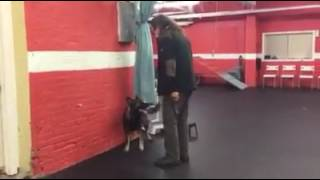 Training | Trick Demo | Solid K9 Training Dog Training