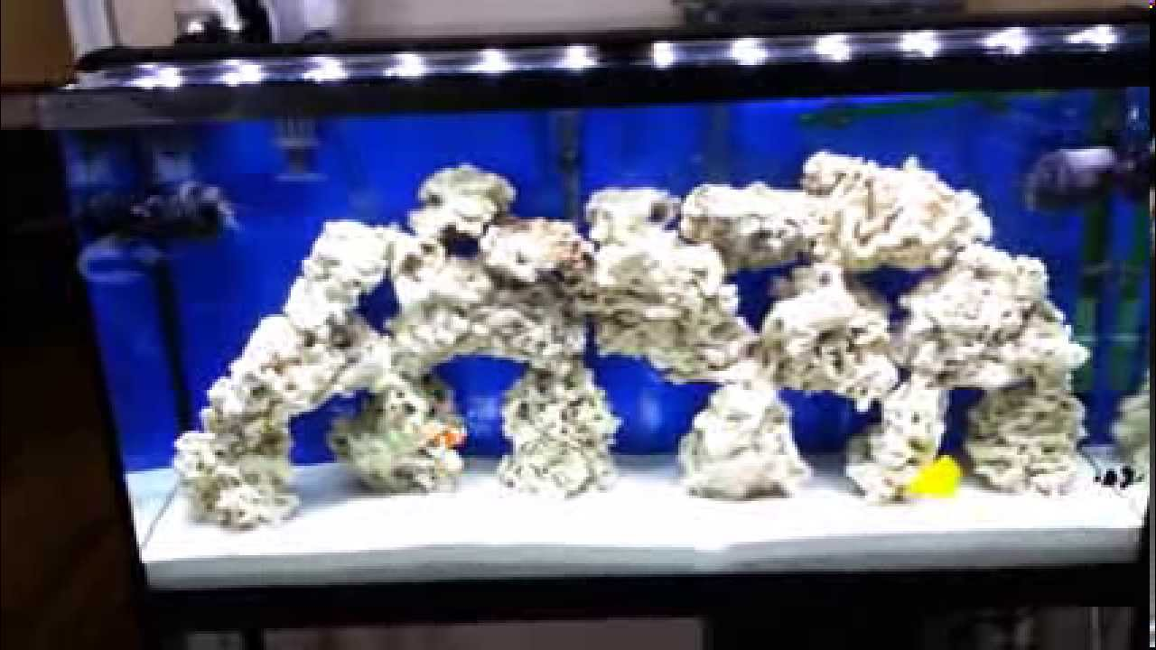 How to refugium vs canister filter in saltwater tank - YouTube