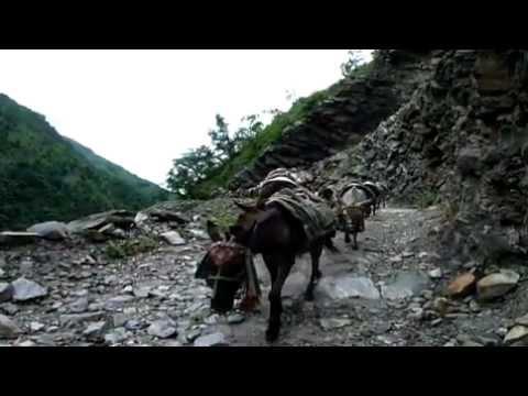 Passage d'une caravane d'anes - Trek des Annapurnas, Nepal