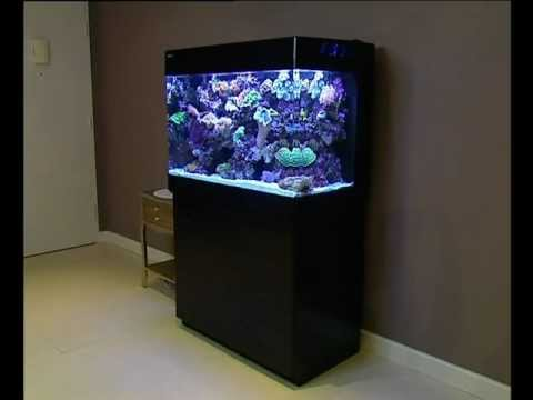 red sea max 250 ultimate all in one plug play coral reef aquarium system youtube. Black Bedroom Furniture Sets. Home Design Ideas