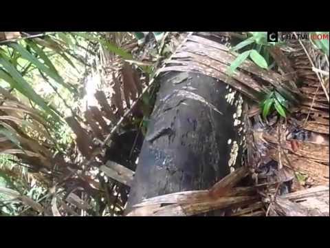 Đặt bẫy bắt heo rừng cực chất của người dân tộc