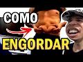 LUCAS LIRA : COMO ENGORDAR !! ZOANDO YOUTUBERS ytpbr