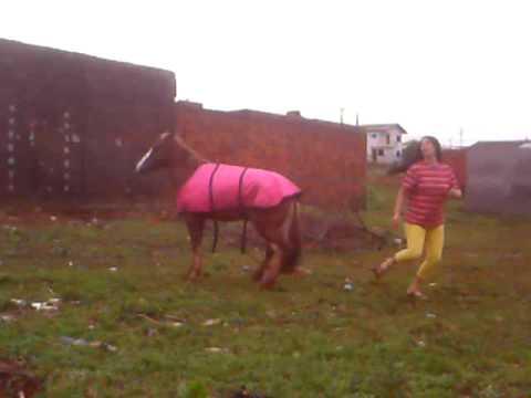 Égua brincando com a dona como se fosse um cachorro