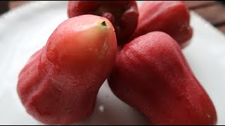 Rose Apple Fruit how to cut / Wax Apple / Water / Mountain