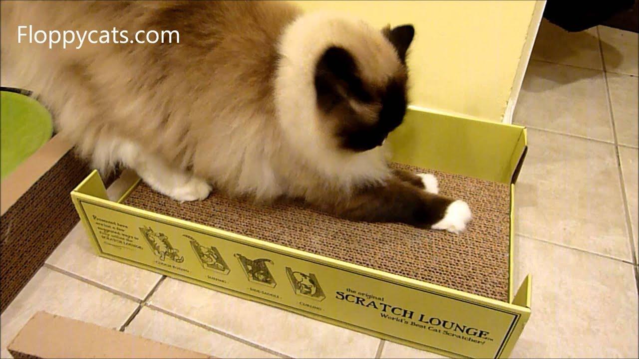 Worldwise Cat Scratcher