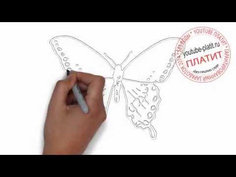 Видео как нарисовать бабочку карандашом поэтапно