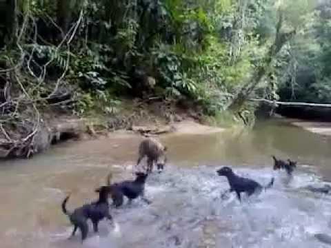 berburu babi hutan