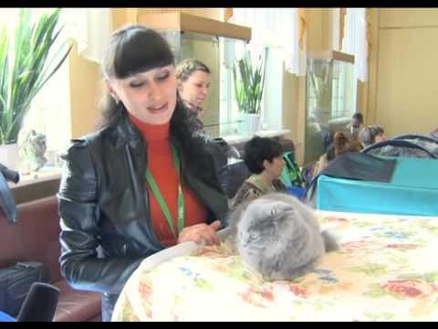 Видео как правильно выбрать котенка