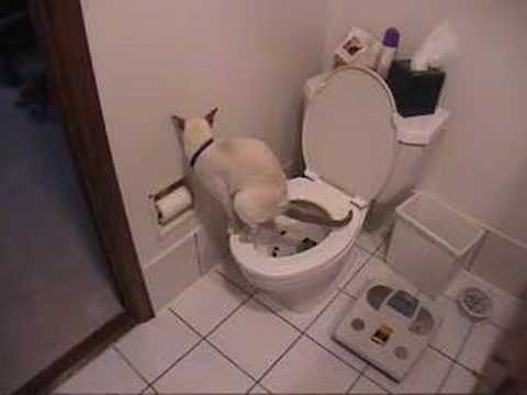 Cat using toilet & toilet paper