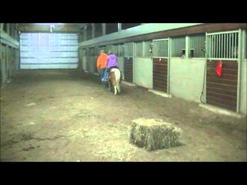 Prancer, Shetland Pony
