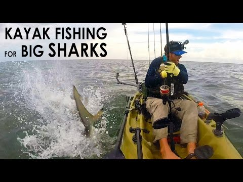 Kayak Fishing: BIG Sharks Offshore