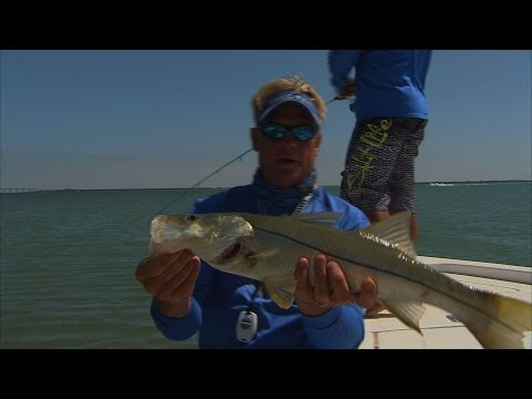 Addictive Fishing - Snook fishing in Tampa Bay