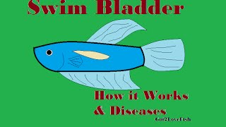 Swim Bladders in Fish