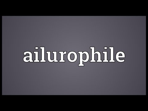 Header of ailurophile