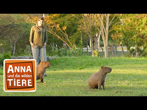 Warum bellt das Wasserschwein? (Doku) | Reportage für Kinder | Anna und die wilden Tiere