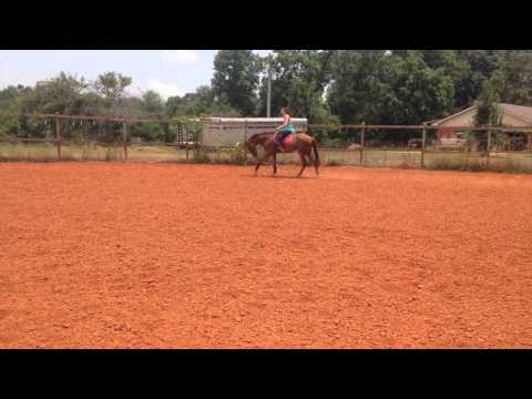 These Irons are Hot 2012 filly 17hh - draw reins