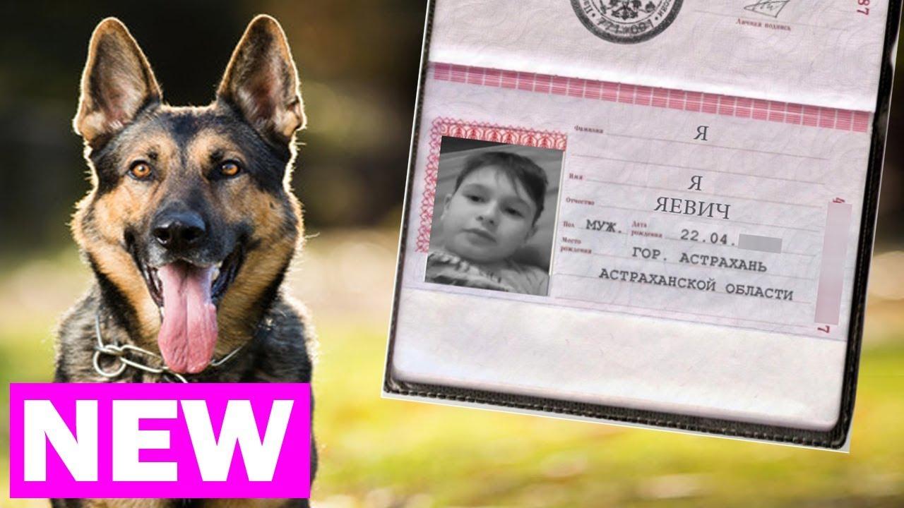 Ахахаха! Я, Я, Яевич - Собака по паспорту