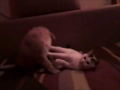 Dog And Cat Hard Sex video
