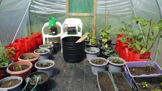 Polytunnel Growing - Our First Year