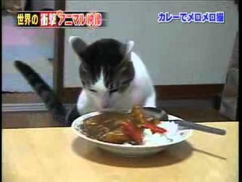 Cat Loves Food Cat Loves Food Funny Cat