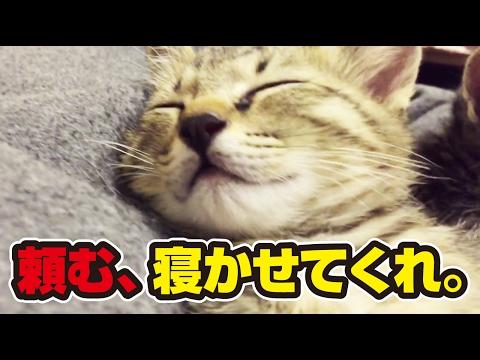 33日目。眠たくてどうしようもない子猫たち!〜Very sleepy kittens!〜
