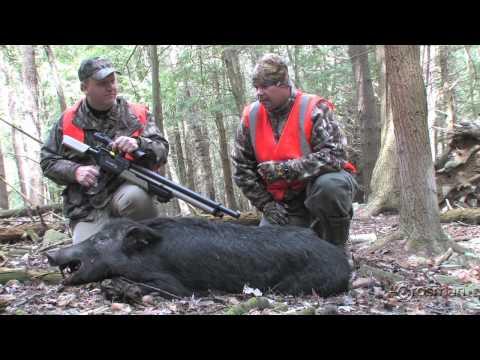 Benjamin Rogue .357 Scores First Hog