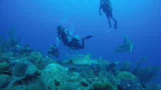 Cuba Diving with sharks