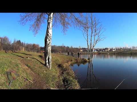 пионерский пруд рыбалка форум