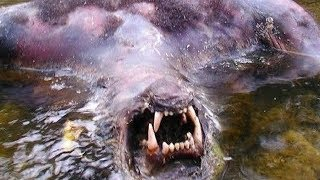 Fishermen Discover Werewolf Corpse in River