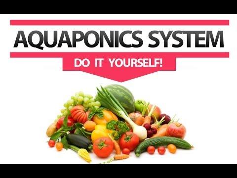 Countertop Aquaponics System : Aquaponics System Design [DIY]