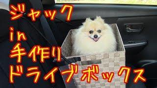 もふもふポメラニアン in 手作りドライブボックス fluffy pomeranian in handmade drive box