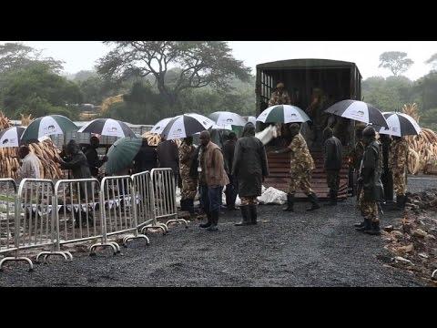 Le Kenya s'apprête à brûler la plus grande quantité d'ivoire