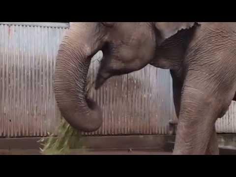 2016.6.25 宇都宮動物園☆象の宮ちゃん【Elephant】_02