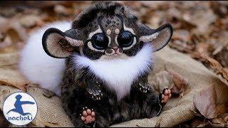 Top 10 Cutest Animals in Africa