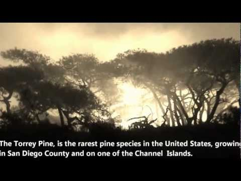 San Diego Free Vacation Tip Travel Guide Torrey Pines State Natural Reserve