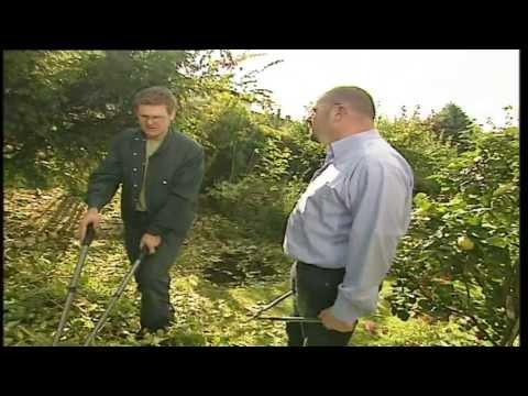 Gartentipps: Sträucher Und Heckenschnitt, Professionelle Pflegetipps Für Ihren Garten