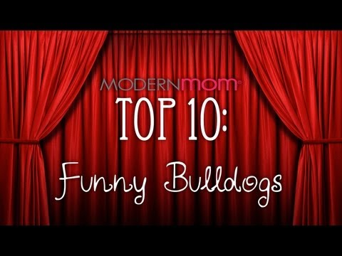 Funny Bulldogs - ModernMom Top 10
