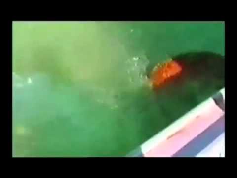 Dog Attack Shark-Собака атакует акулу