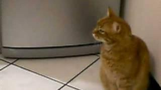 Isidoro Il Gatto Che Parla 3