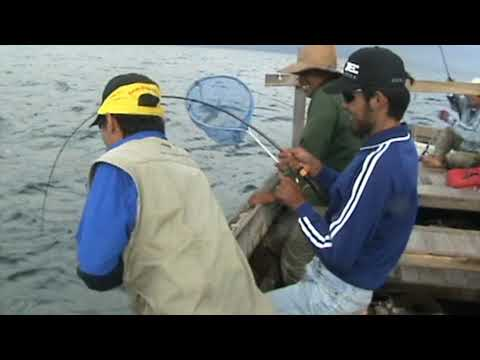 South Borneo Sport Fishing Club, line break part two !!!